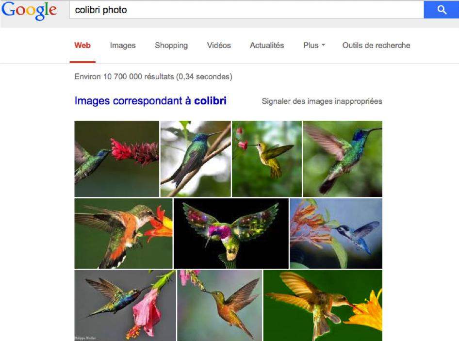 Google Colibri a été conçu pour analyser les requêtes à partir des synonymes, ainsi, on peut taper colibri photo et colibri image-2
